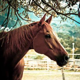 Horse sense by Magdalena Wysoczanska - Animals Horses