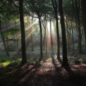 Sun in the Tree Tops by Ceri Jones - Landscapes Forests ( season, fog, summer, trees, woodland, morning, woods, misty, mist )