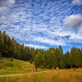 Sheep clouds by Stanislav Horacek - Landscapes Weather