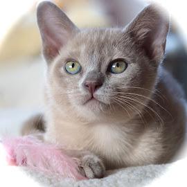 Dear Ninive -Lady of the Lake by Krista Nurmi - Animals - Cats Kittens (  )