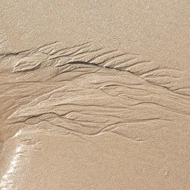 Minidelta by Trond Strand - Nature Up Close Sand ( water, sand, delta, tide, nature up close, sea, path, nature, landscape )