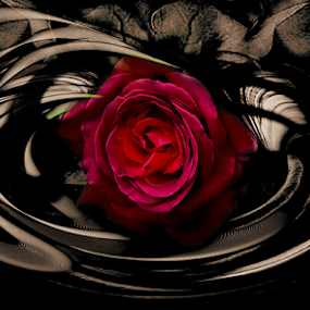 Pain by Carmen Velcic - Digital Art Abstract ( abstract, red, roses, flovers, digital )