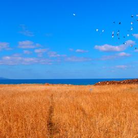Freedom by Theodoros Theodorou - Landscapes Prairies, Meadows & Fields