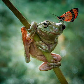 WITH YOU by Alonk's Roby - Animals Amphibians (  )