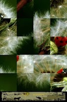 Screenshot of Nature Puzzle: Taraxacum