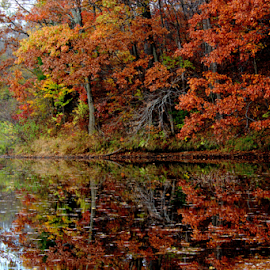 End of Fall by Janet Lyle - Landscapes Waterscapes ( autumn, foliage, fall )