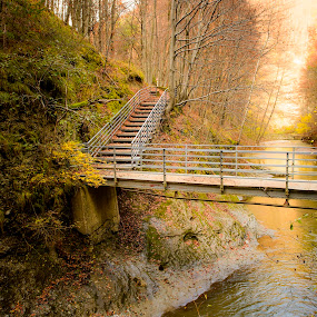 My Late Autumn by Andreea Alexe - Landscapes Forests ( autumn, staircase, bridge, leaves, sun rays, path, nature, landscape,  )