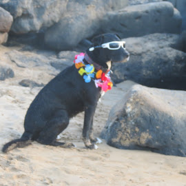 On Vacation! by Shiela Arnold - Animals - Dogs Playing (  )