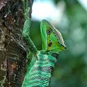 Cone head lizard