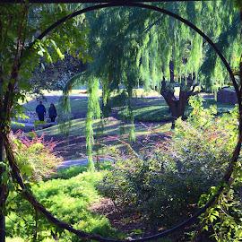 Arbor View by Steve Munford - City,  Street & Park  City Parks ( park, sabot, views, arbor, san antonio )