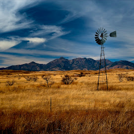 Santa Rita Windmill by Dub Scroggin - Landscapes Prairies, Meadows & Fields ( field, mountains, buffalo grass, santa rita mountains, windmill )
