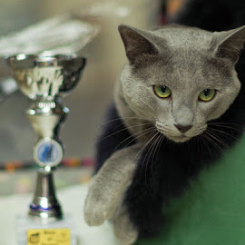 The Champion by Aleksander Cierpisz - Animals - Cats Portraits