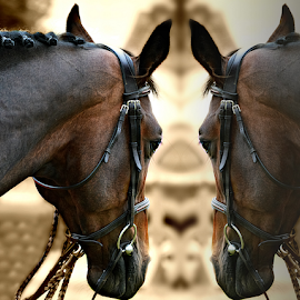 Double me! by Manuela Dedić - Animals Horses ( mirror, reflection, horses, double,  )