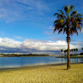 Bayside Palm by Silvan Saria - City,  Street & Park  Skylines ( palm, skyline, bay, beautiful, bayside, oceanlife, photography, palmtree )