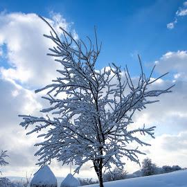 Alone by Gligor Mihai - Nature Up Close Trees & Bushes ( winter, tress, cold, snow, frozen )