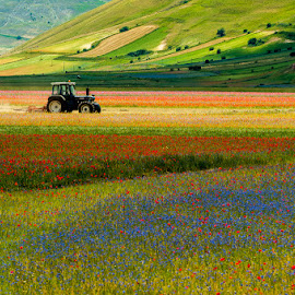 Trebbiando in Castelluccio by Antonio Zarli - Landscapes Prairies, Meadows & Fields (  )