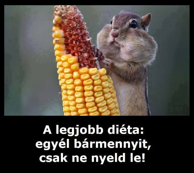 A legjobb diéta - egy vicces kép