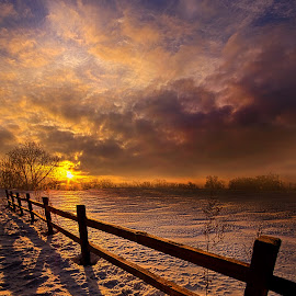 Fence Walking by Phil Koch - Landscapes Prairies, Meadows & Fields ( vertical, photograph, farmland, yellow, leaves, crop, love, sky, tree, nature, autumn, shadow, snow, perspective, flower, orange, twilight, art, agriculture, horizon, portrait, fence, environment, dawn, winter, season, serene, trees, lines, farm field, floral, inspirational, natural light, wisconsin, ray, landscape, phil koch, sun, photography, farm, horizons, inspired, clouds, office, park, green, scenic, morning, shadows, wild flowers, field, red, fog, blue, sunset, peace, fall, meadow, summer, beam, earth, sunrise, mist,  )