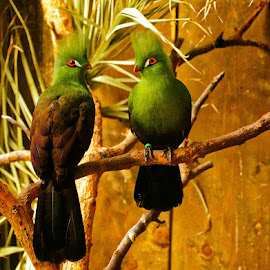 Happiness by Radu Eftimie - Animals Birds ( couple, birds )