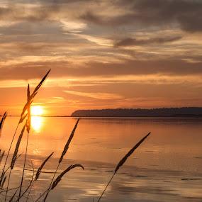 Summer Sunset by Clement Stevens - Landscapes Sunsets & Sunrises ( clouds, orange, color, sunset, summer,  )