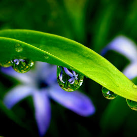 by Slobodan Bobo Kovac - Nature Up Close Natural Waterdrops ( wild, reflection, grass, mazoce, beauty )