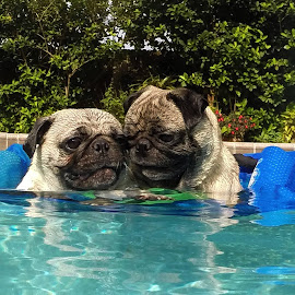 2 Pug Friends by Marie Terry - Animals - Dogs Portraits