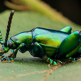 Green Bug 141120 by Carrot Lim - Animals Insects & Spiders