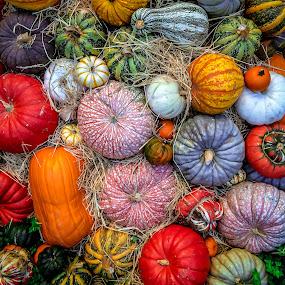 Pumpkins and Squash by David Long - Nature Up Close Gardens & Produce ( gords, pumpkins, squash )