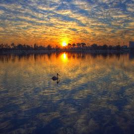 by Matty Gott - Landscapes Sunsets & Sunrises ( perth, swan river,  )