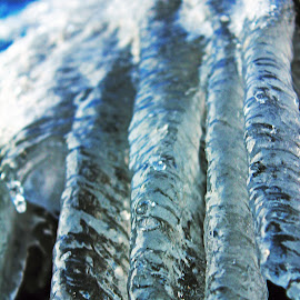 Icycles by Sonja Kenner - Nature Up Close Water ( water, nature, icycles, beauty )