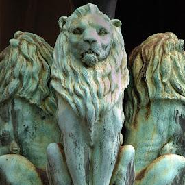 Macquarie St. Lions by Edd Rose - Buildings & Architecture Architectural Detail ( nophotoshop, sculpture, copper, lions, sydney )