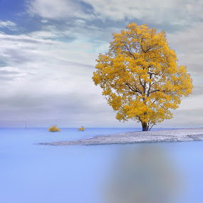 Lonely tree by IkanHiu Pegel Pegel - Landscapes Waterscapes ( ihpp, infrared, ikanhiupegelpegel )