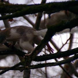 by Buddy Boyd - Animals Other Mammals ( cool, tricolor, white, grey, ozarks, squirrel,  )