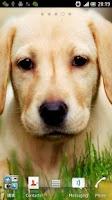 Screenshot of 3D Puppy HD Live Wallpaper