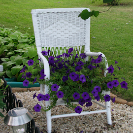 Chair Garden by Marsha Biller - Artistic Objects Furniture ( chair, wicker, purple, flowers, outside, Chair, Chairs, Sitting )