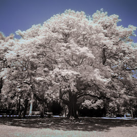 White and Blue by Madhujith Venkatakrishna - City,  Street & Park  City Parks