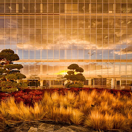 Sunset Reflection by Kelly Clark - Buildings & Architecture Other Exteriors ( canon eos 60d, seattle, russell financial building, observation deck )