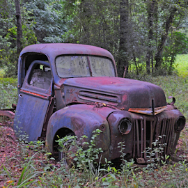 Blue Ford by Elaine Brixhoff - Transportation Other ( antique truck, rusting, rural north florida, blue ford, abandoned )