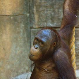 Just hangin around by Tim Gritzuk - Animals Other Mammals