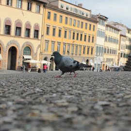Pigeon by Ami Johnson - Novices Only Street & Candid ( cobbles, pigeon, walking, street, angle )