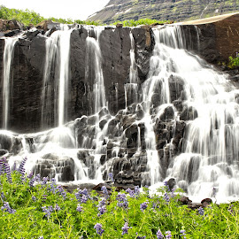 Waterfall by Kristín Hávarðsdóttir - Landscapes Waterscapes ( water, purple, fresh, green, flowers, soft )