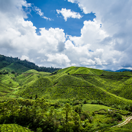 Boh Tea Plantation @ Cameron Highland by WengWah Wayne - Landscapes Mountains & Hills ( green, cloudy, cameron, boh tea, landscape, plantation )