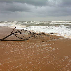 beach by Alpa Gandhi - Instagram & Mobile iPhone ( sand, waves, beach, branches )