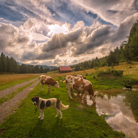 Thirsty cows by Stanislav Horacek - Landscapes Prairies, Meadows & Fields
