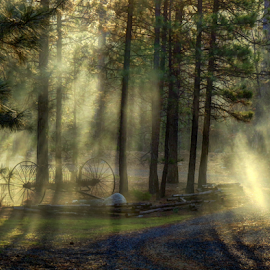 Sun Ray Morning by Lori Quillen - Landscapes Sunsets & Sunrises ( fog, weather, sunrise, sun rays )
