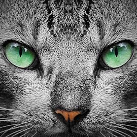 by Dewi Probyn - Animals - Cats Portraits