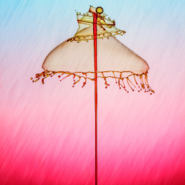 Queen's Umbrella by Ganjar Rahayu - Abstract Water Drops & Splashes ( waterdrop )