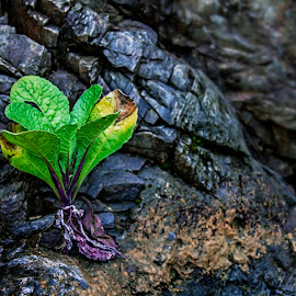 Life-force by Sandip Basu Roy - Nature Up Close Rock & Stone ( plant, hdr, green, vivid, photo, close up, rocks, photography )