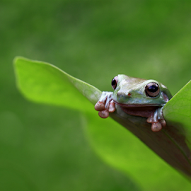 Peek a boo by Esther Pupung - Animals Amphibians