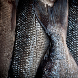 fish by Stefan Mihailovic - Food & Drink Meats & Cheeses ( food, fish, meat, croatia, sea, fishing, animal,  )